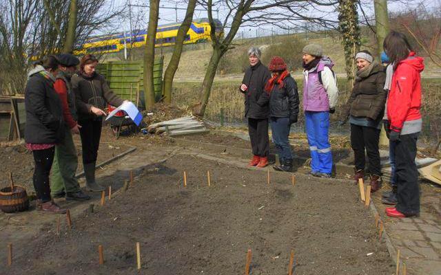 April 2013: Planting the heritage/ forgotten vegetables bed  (Photo: Caren Harple)