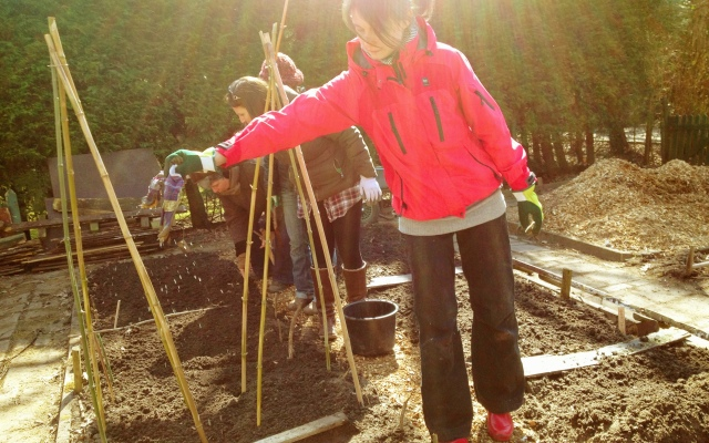 April 2013: Planting the biodynamic bed  (Photo: Jennifer Lenhart)